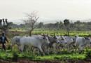 Nigeria: Prezydent Buhari obwinia chrześcijańskie ofiary niedawnego ataku w Kadunie