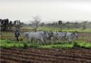 Nigeria: Fulani bojownicy zaatakowali chrześcijan w stanie Kaduna, 20 zabitych(aktualizacja)