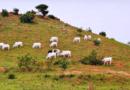 Nigeria: Zamordowano Chrześcijan w sklepie w miejscowości Miango w stanie Plateau